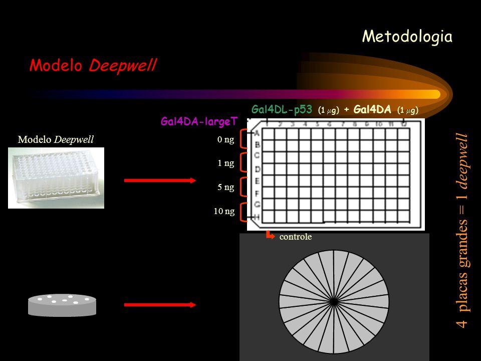 Metodologia Modelo Deepwell Gal4DA-largeT Gal4DL-p53 (1 g) + Gal4DA (1 g) 0 ng 1 ng 5 ng 10 ng controle 4 placas grandes = 1 deepwell