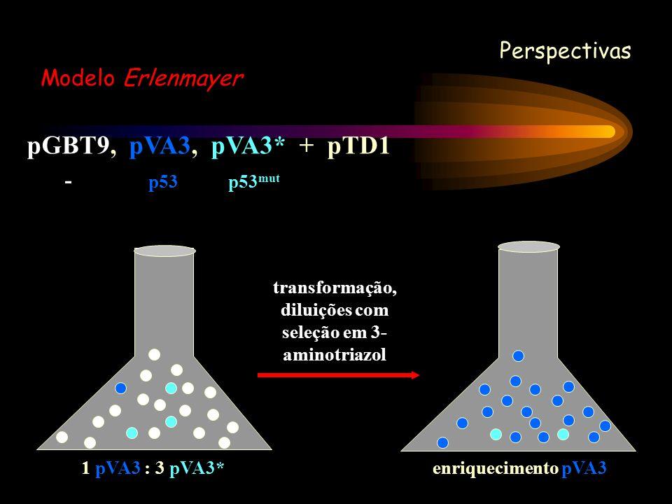 pGBT9, pVA3, pVA3* + pTD1 - p53 p53 mut Perspectivas Modelo Erlenmayer transformação, diluições com seleção em 3- aminotriazol 1 pVA3 : 3 pVA3*enrique