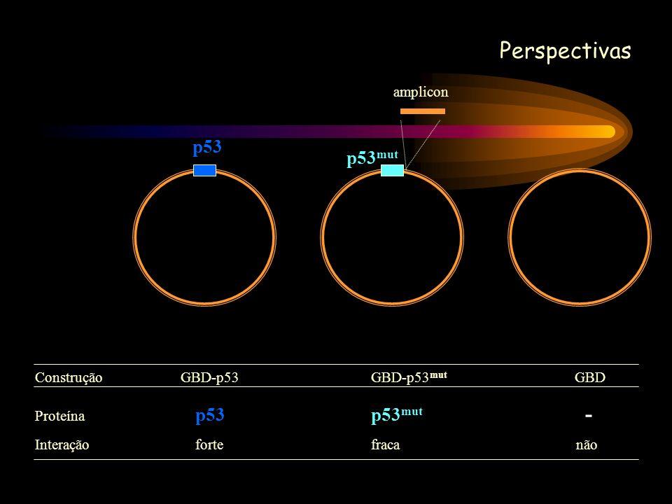 Perspectivas p53 p53 mut amplicon Construção GBD-p53GBD-p53 mut GBD Proteína p53p53 mut - Interação fortefraca não