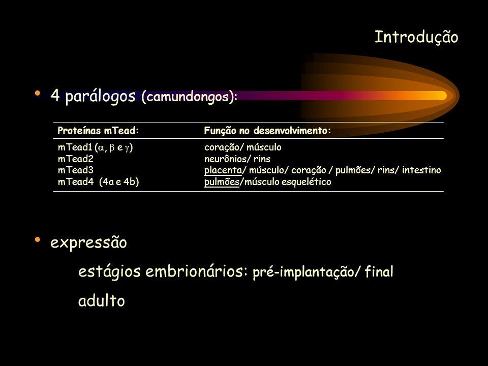Introdução 4 parálogos (camundongos): expressão estágios embrionários: pré-implantação/ final adulto Proteínas mTead:Função no desenvolvimento: mTead1