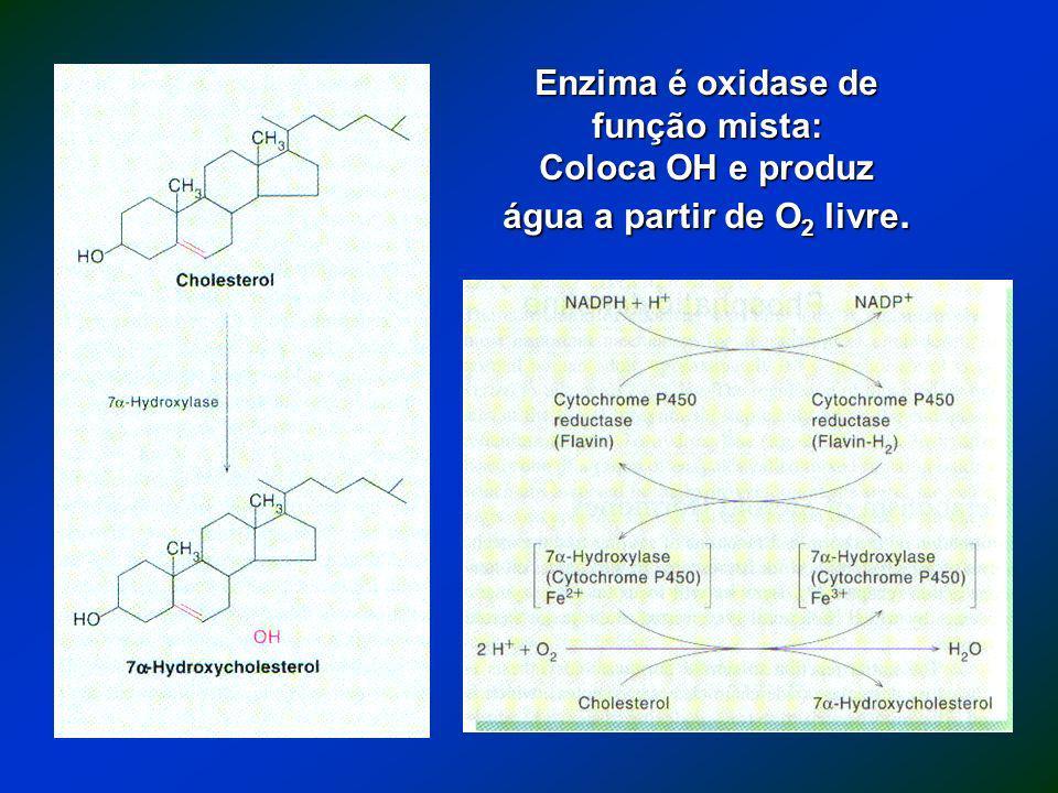 Enzima é oxidase de função mista: Coloca OH e produz água a partir de O 2 livre.