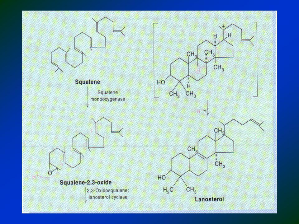 A conversão do lanosterol em colesterol ocorre em várias etapas: 1.Encurtamento da cadeia: de 30 a 27 carbonos 2.Remoção de 2 metil do C4 3.Migração de dupla de C8 para C5 4.Redução dupla entre C24 e C25 5.Todas enzimas estão no retículo endoplasmático