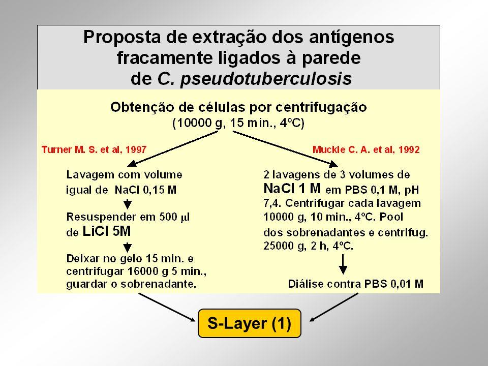 S-Layer (1)
