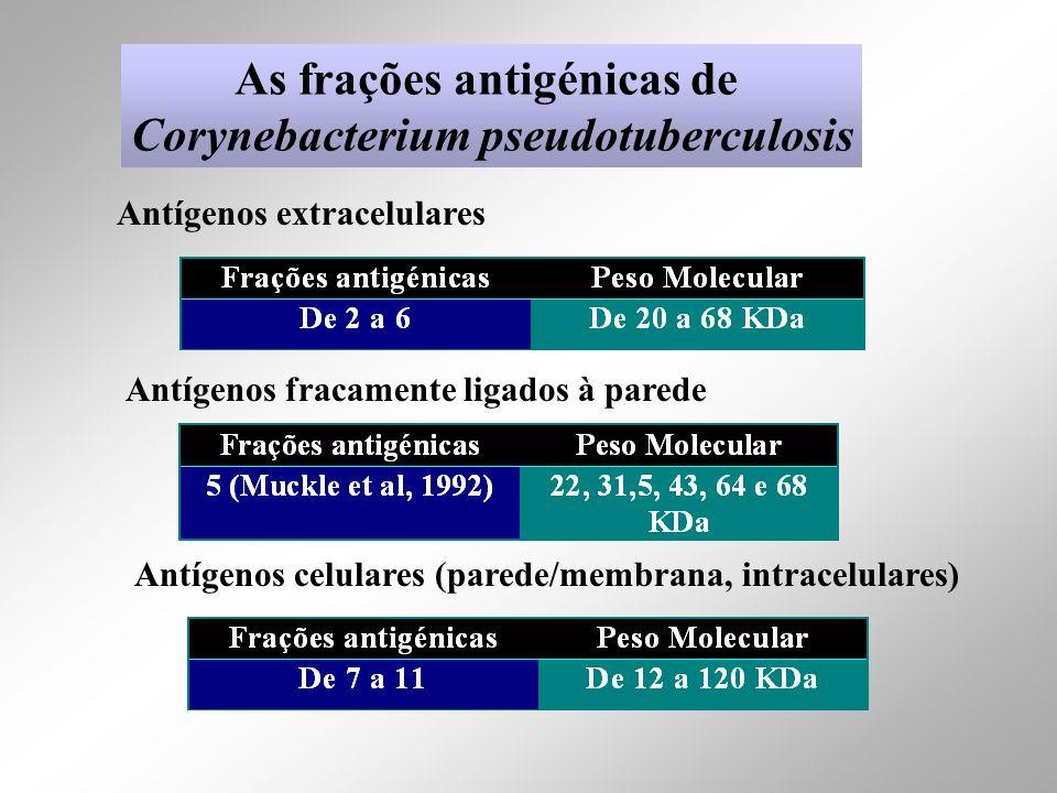 As frações antigénicas de Corynebacterium pseudotuberculosis Antígenos extracelulares Antígenos fracamente ligados à parede Antígenos celulares (pared
