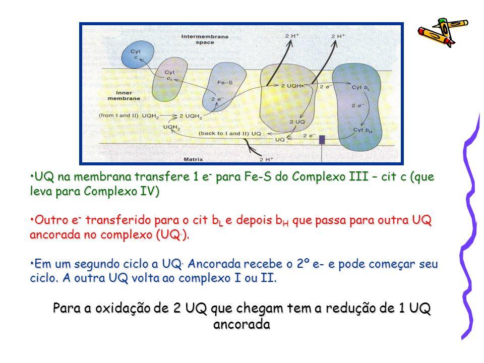 UQ na membrana transfere 1 e - para Fe-S do Complexo III – cit c (que leva para Complexo IV)UQ na membrana transfere 1 e - para Fe-S do Complexo III –