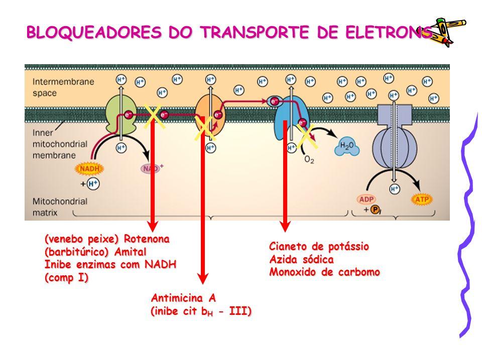 BLOQUEADORES DO TRANSPORTE DE ELETRONS (venebo peixe) Rotenona (barbitúrico) Amital Inibe enzimas com NADH (comp I) Antimicina A (inibe cit b H - III)