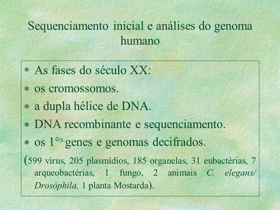 Sequenciamento inicial e análises do genoma humano §As fases do século XX: os cromossomos. a dupla hélice de DNA. DNA recombinante e sequenciamento. o