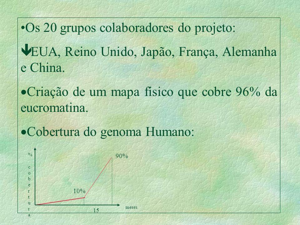 Os 20 grupos colaboradores do projeto: ê EUA, Reino Unido, Japão, França, Alemanha e China. Criação de um mapa físico que cobre 96% da eucromatina. Co