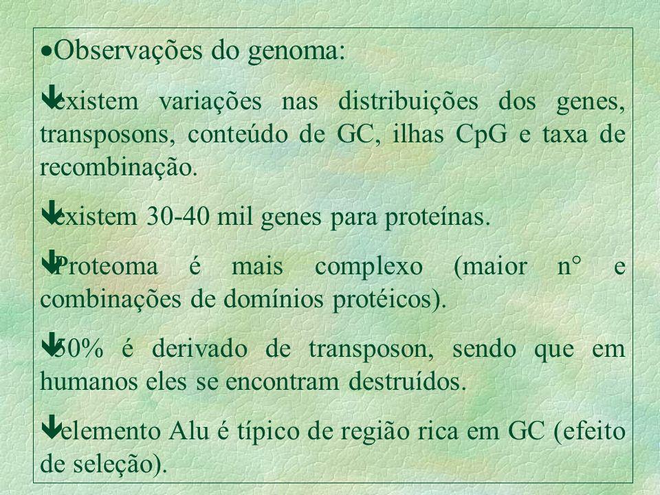 Observações do genoma: êexistem variações nas distribuições dos genes, transposons, conteúdo de GC, ilhas CpG e taxa de recombinação. êexistem 30-40 m
