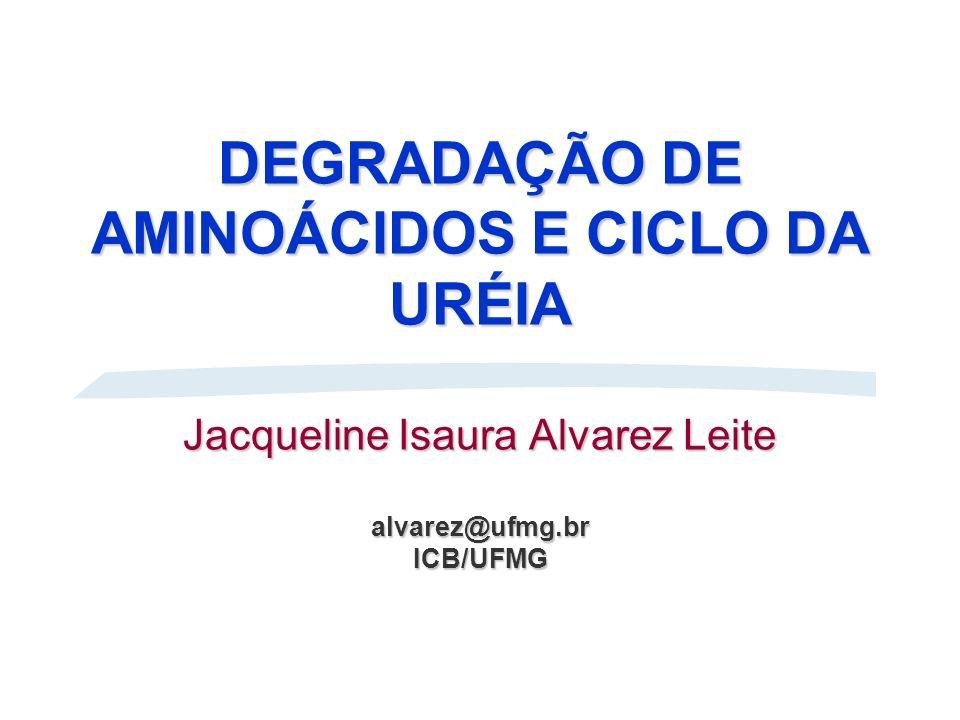 DEGRADAÇÃO DE AMINOÁCIDOS E CICLO DA URÉIA Jacqueline Isaura Alvarez Leite alvarez@ufmg.br ICB/UFMG