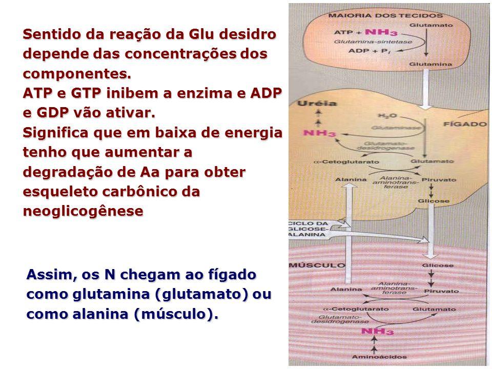 Sentido da reação da Glu desidro depende das concentrações dos componentes. ATP e GTP inibem a enzima e ADP e GDP vão ativar. Significa que em baixa d