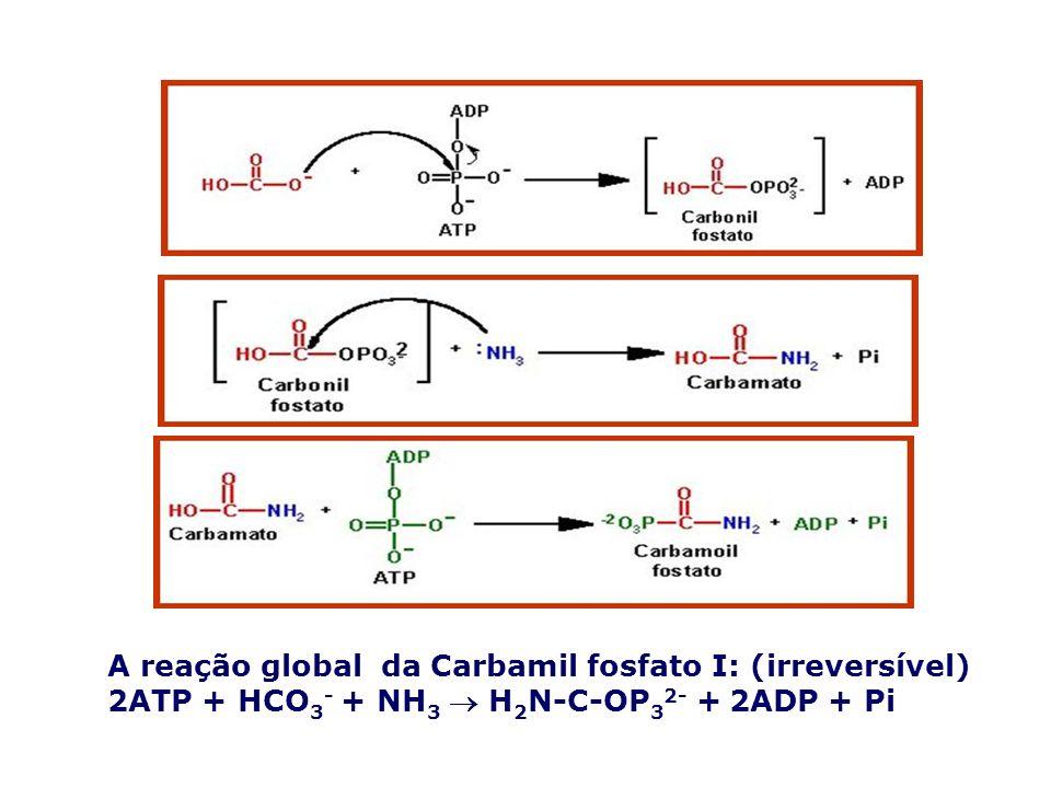 A reação global da Carbamil fosfato I: (irreversível) 2ATP + HCO 3 - + NH 3 H 2 N-C-OP 3 2- + 2ADP + Pi
