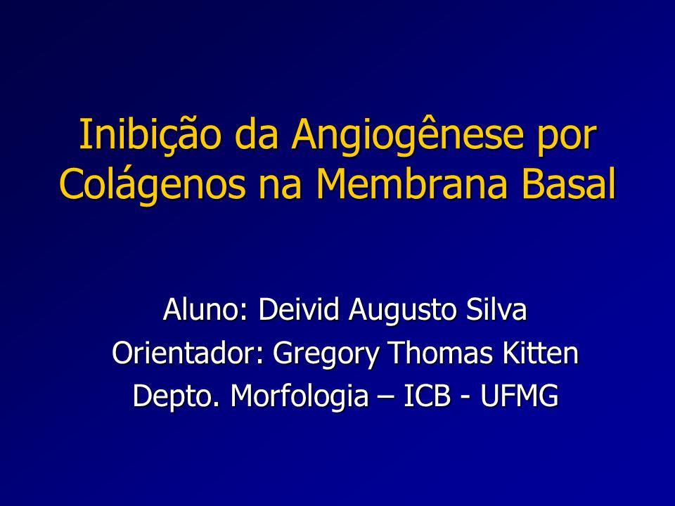 Inibição da Angiogênese por Colágenos na Membrana Basal Aluno: Deivid Augusto Silva Orientador: Gregory Thomas Kitten Depto. Morfologia – ICB - UFMG