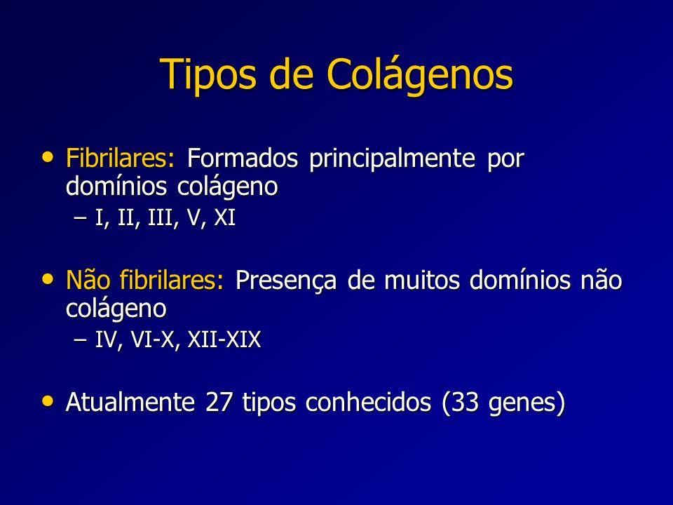 Tipos de Colágenos Fibrilares: Formados principalmente por domínios colágeno Fibrilares: Formados principalmente por domínios colágeno –I, II, III, V,