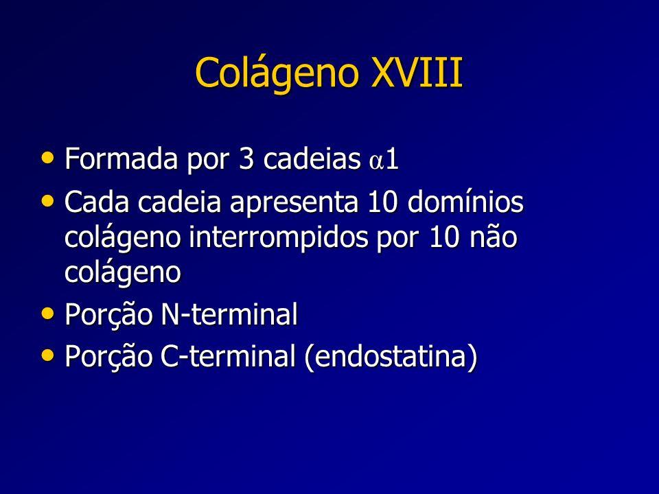 Colágeno XVIII Formada por 3 cadeias α 1 Formada por 3 cadeias α 1 Cada cadeia apresenta 10 domínios colágeno interrompidos por 10 não colágeno Cada c