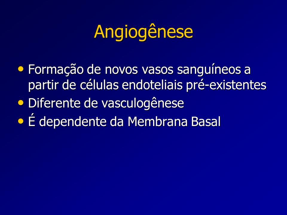 Angiogênese Formação de novos vasos sanguíneos a partir de células endoteliais pré-existentes Formação de novos vasos sanguíneos a partir de células e