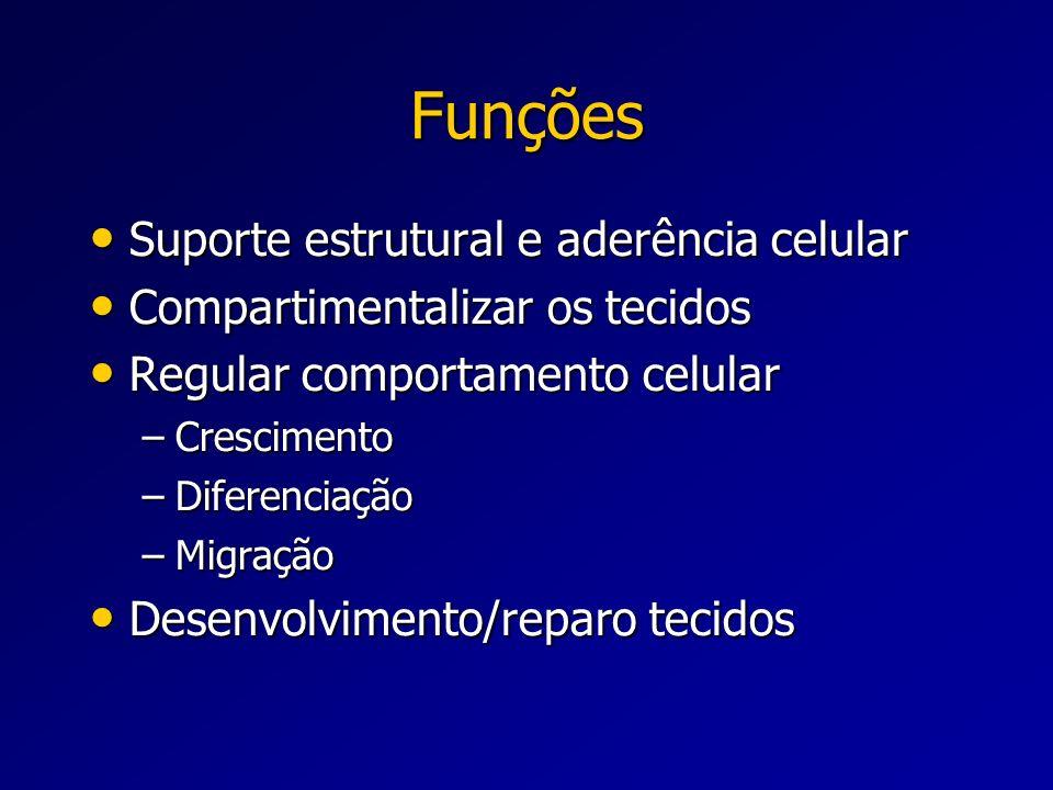 Funções Suporte estrutural e aderência celular Suporte estrutural e aderência celular Compartimentalizar os tecidos Compartimentalizar os tecidos Regu