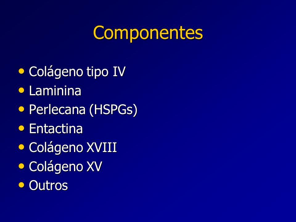 Componentes Colágeno tipo IV Colágeno tipo IV Laminina Laminina Perlecana (HSPGs) Perlecana (HSPGs) Entactina Entactina Colágeno XVIII Colágeno XVIII