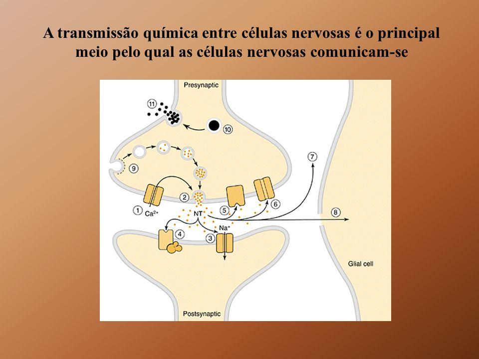 Dois tipos distintos de tráfego intracelular de membranas I- Tráfego constitutivo II-Tráfego especializado ou regulado
