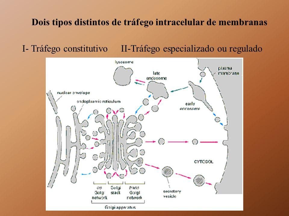 COMPLEXO SEC6/8 DIRECIONAMENTO Rab p115/Uso 1TRAVAMENTO COMPLEXO SNARE DOCKING CÁLCIO, GTP, ??.