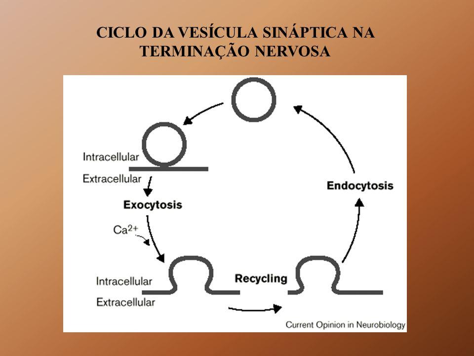 CICLO DA VESÍCULA SINÁPTICA NA TERMINAÇÃO NERVOSA