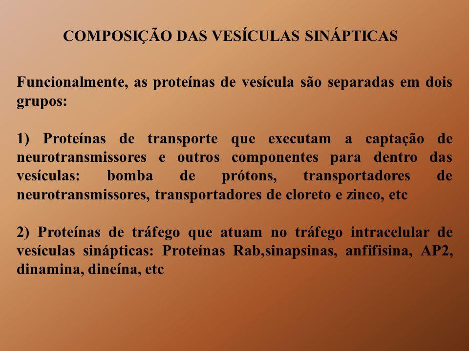 COMPOSIÇÃO DAS VESÍCULAS SINÁPTICAS Funcionalmente, as proteínas de vesícula são separadas em dois grupos: 1) Proteínas de transporte que executam a c