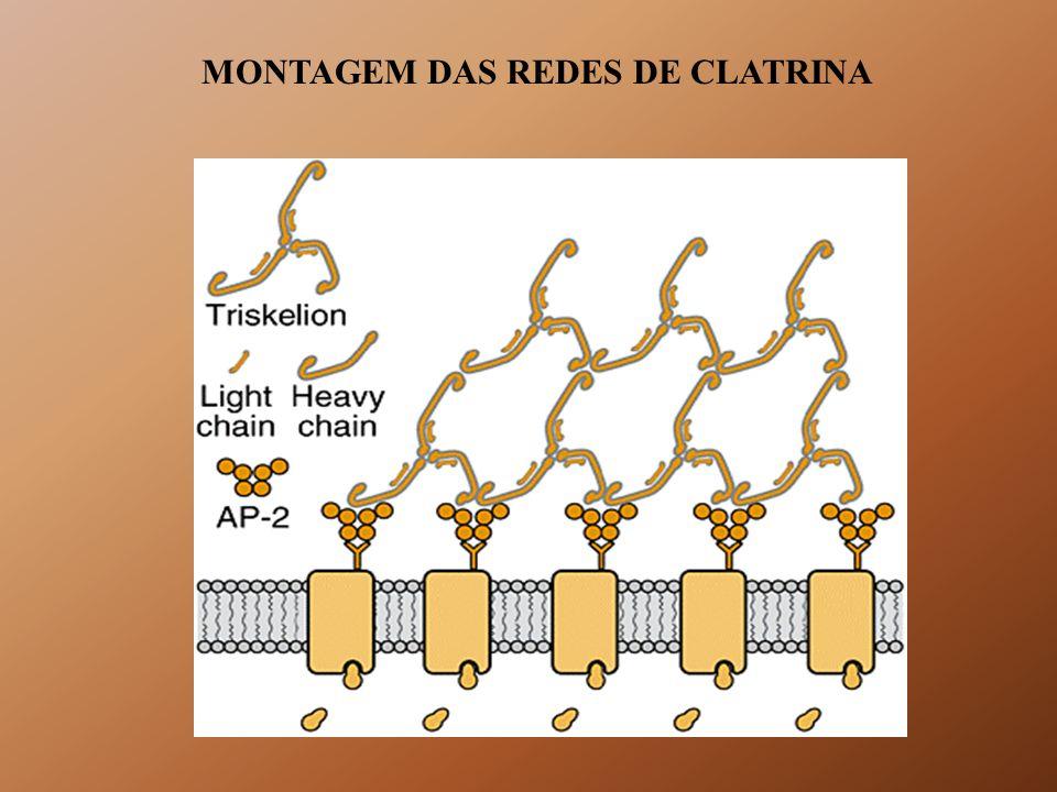 MONTAGEM DAS REDES DE CLATRINA