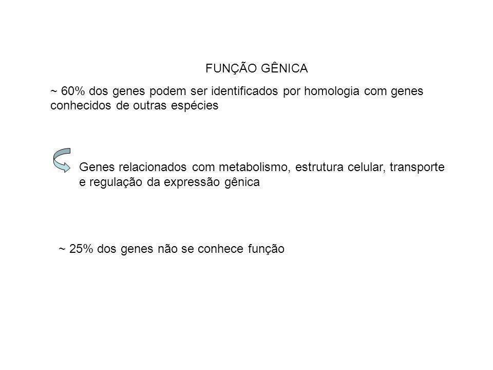 FUNÇÃO GÊNICA ~ 60% dos genes podem ser identificados por homologia com genes conhecidos de outras espécies Genes relacionados com metabolismo, estrut