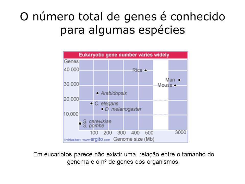 O número total de genes é conhecido para algumas espécies Em eucariotos parece não existir uma relação entre o tamanho do genoma e o nº de genes dos o