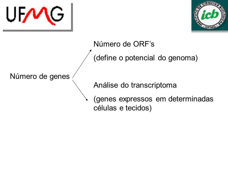 LGCMURLGA Número de genes Número de ORFs (define o potencial do genoma) Análise do transcriptoma (genes expressos em determinadas células e tecidos)