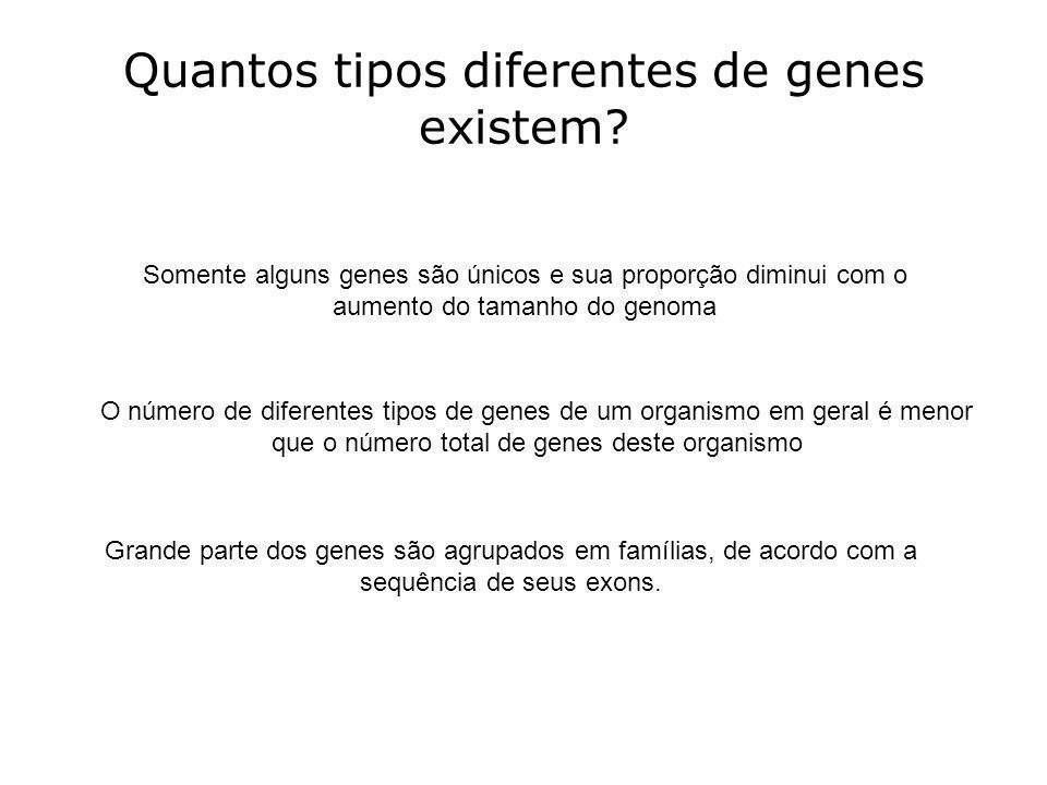 Quantos tipos diferentes de genes existem? Somente alguns genes são únicos e sua proporção diminui com o aumento do tamanho do genoma O número de dife