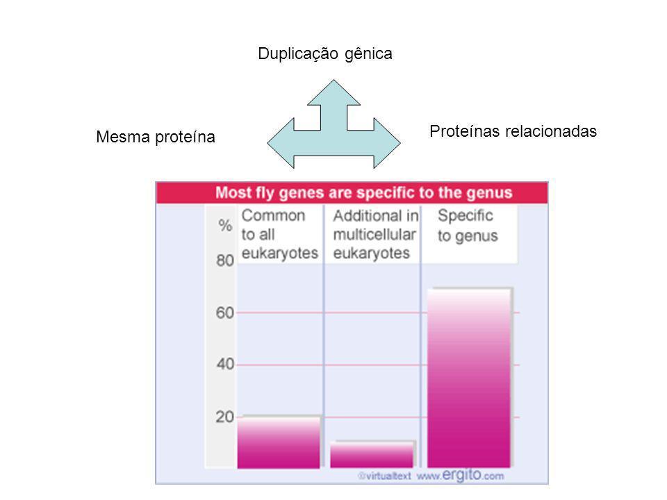 Duplicação gênica Mesma proteína Proteínas relacionadas