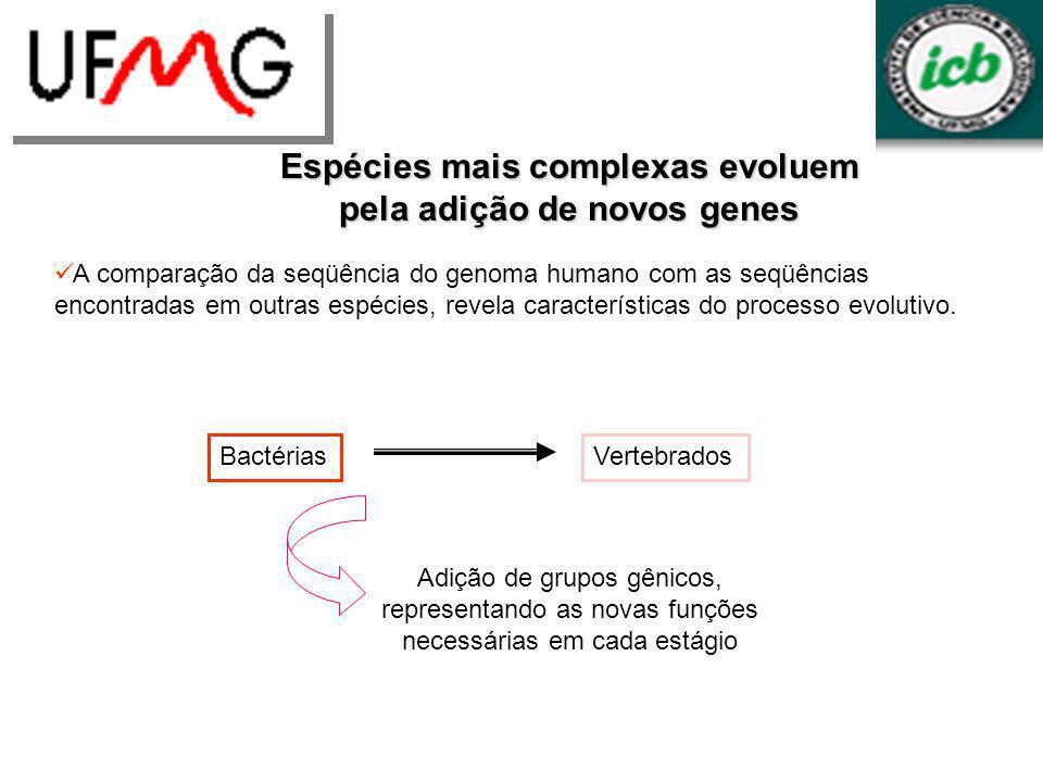 BactériasVertebrados Adição de grupos gênicos, representando as novas funções necessárias em cada estágio Espécies mais complexas evoluem pela adição