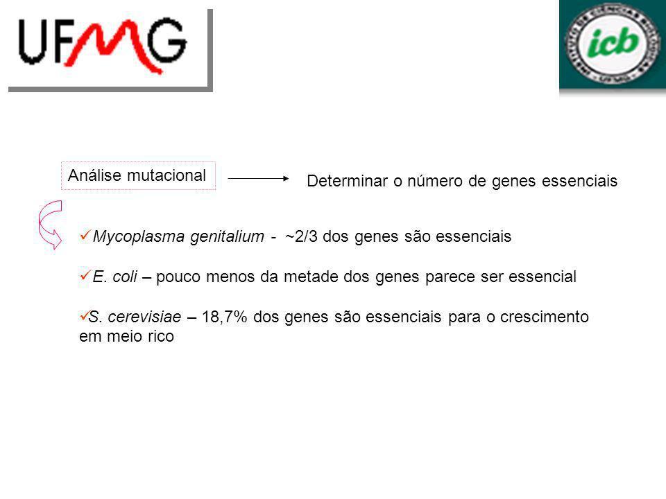 Determinar o número de genes essenciais Análise mutacional Mycoplasma genitalium - ~2/3 dos genes são essenciais E. coli – pouco menos da metade dos g
