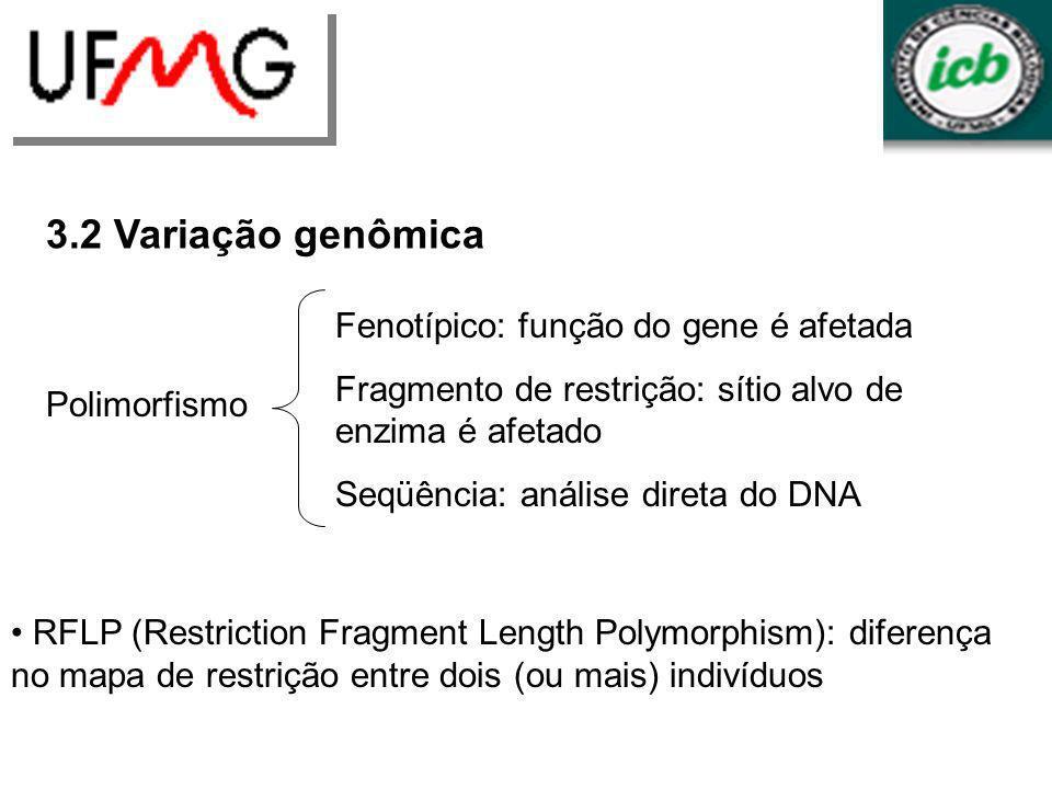 URLGA 3.2 Variação genômica Polimorfismo Fenotípico: função do gene é afetada Fragmento de restrição: sítio alvo de enzima é afetado Seqüência: anális