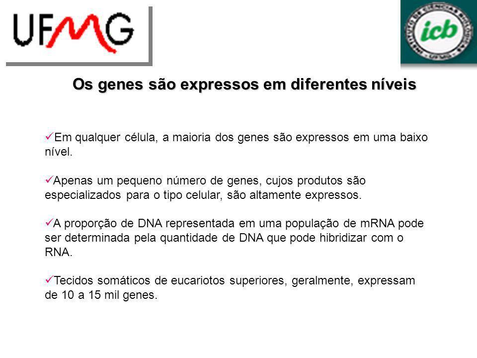 Os genes são expressos em diferentes níveis Em qualquer célula, a maioria dos genes são expressos em uma baixo nível. Apenas um pequeno número de gene