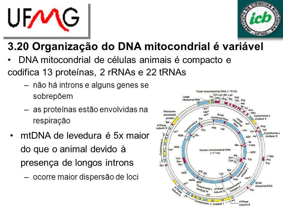 –não há introns e alguns genes se sobrepõem –as proteínas estão envolvidas na respiração mtDNA de levedura é 5x maior do que o animal devido à presenç