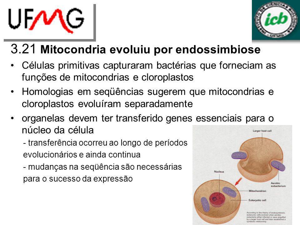 3.21 Mitocondria evoluiu por endossimbiose Células primitivas capturaram bactérias que forneciam as funções de mitocondrias e cloroplastos Homologias
