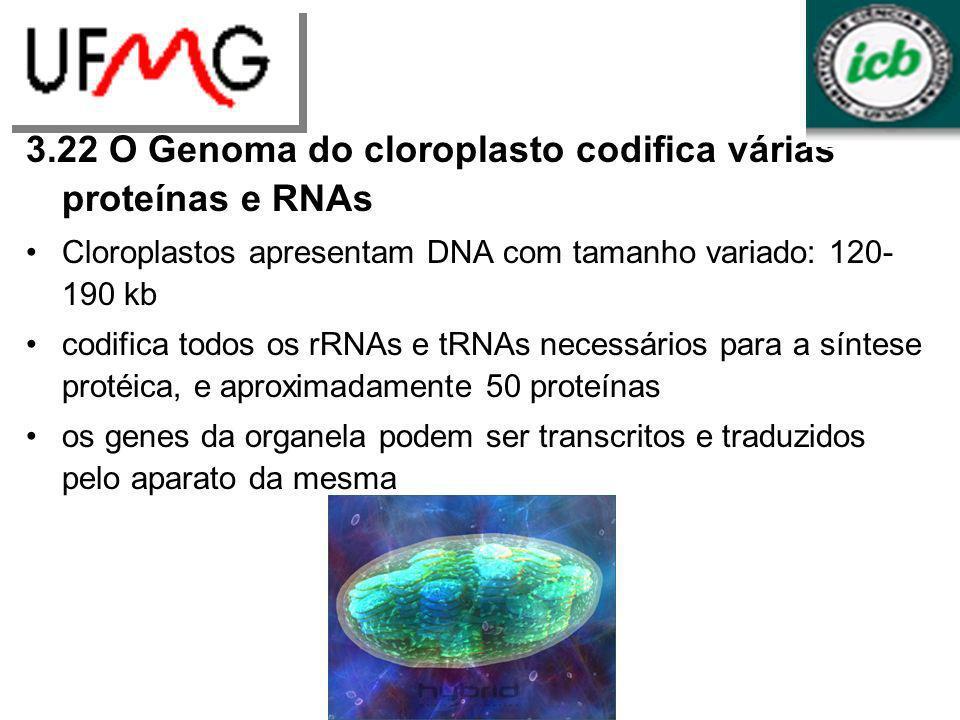 3.22 O Genoma do cloroplasto codifica várias proteínas e RNAs Cloroplastos apresentam DNA com tamanho variado: 120- 190 kb codifica todos os rRNAs e t