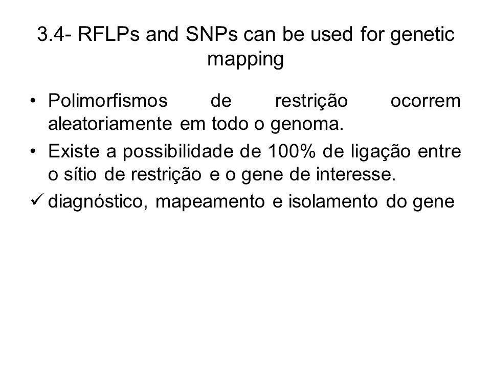 3.4- RFLPs and SNPs can be used for genetic mapping Polimorfismos de restrição ocorrem aleatoriamente em todo o genoma. Existe a possibilidade de 100%