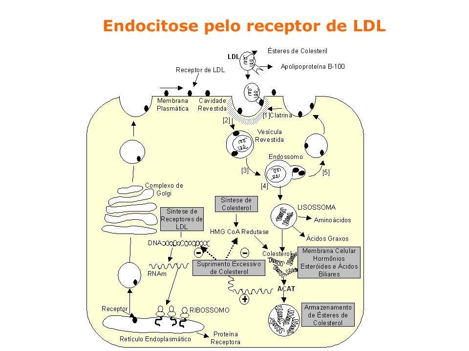 Endocitose pelo receptor de LDL