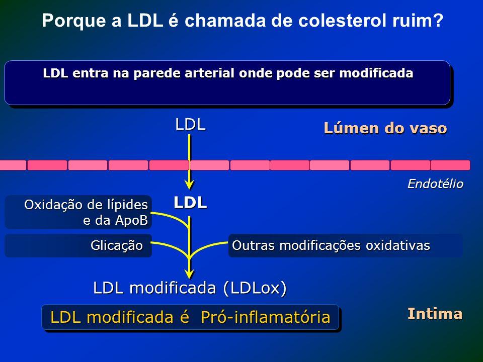 Porque a LDL é chamada de colesterol ruim? Endotélio Lúmen do vaso LDL LDL entra na parede arterial onde pode ser modificada LDL Intima LDL modificada