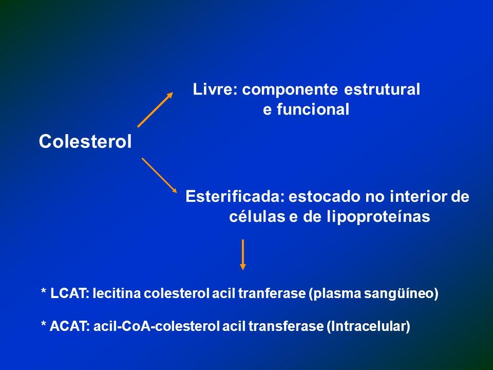 Livre: componente estrutural e funcional Esterificada: estocado no interior de células e de lipoproteínas * LCAT: lecitina colesterol acil tranferase (plasma sangüíneo) * ACAT: acil-CoA-colesterol acil transferase (Intracelular)