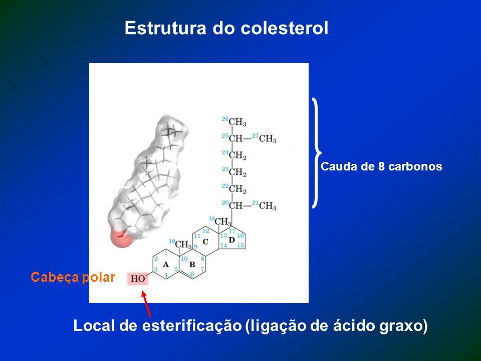 Estrutura do colesterol Local de esterificação (ligação de ácido graxo) Cauda de 8 carbonos Cabeça polar