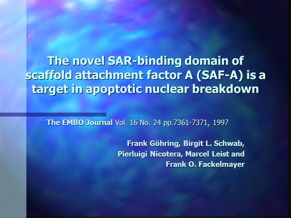 Introdução n A arquitetura do núcleo é organizada por uma proteína chamada scaffold.
