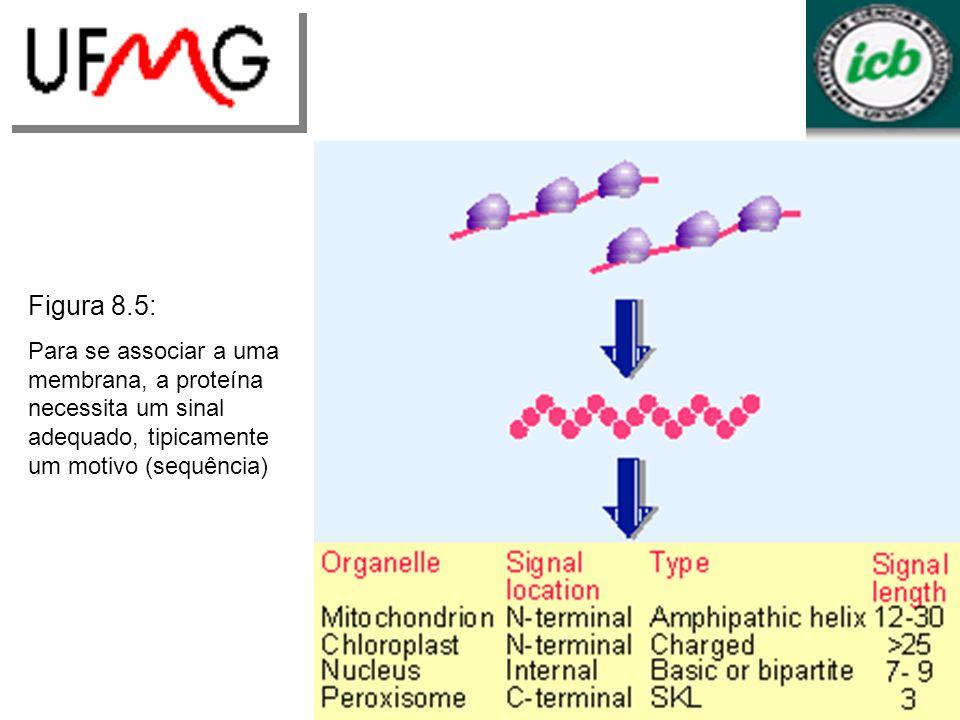 Figura 8.5: Para se associar a uma membrana, a proteína necessita um sinal adequado, tipicamente um motivo (sequência)