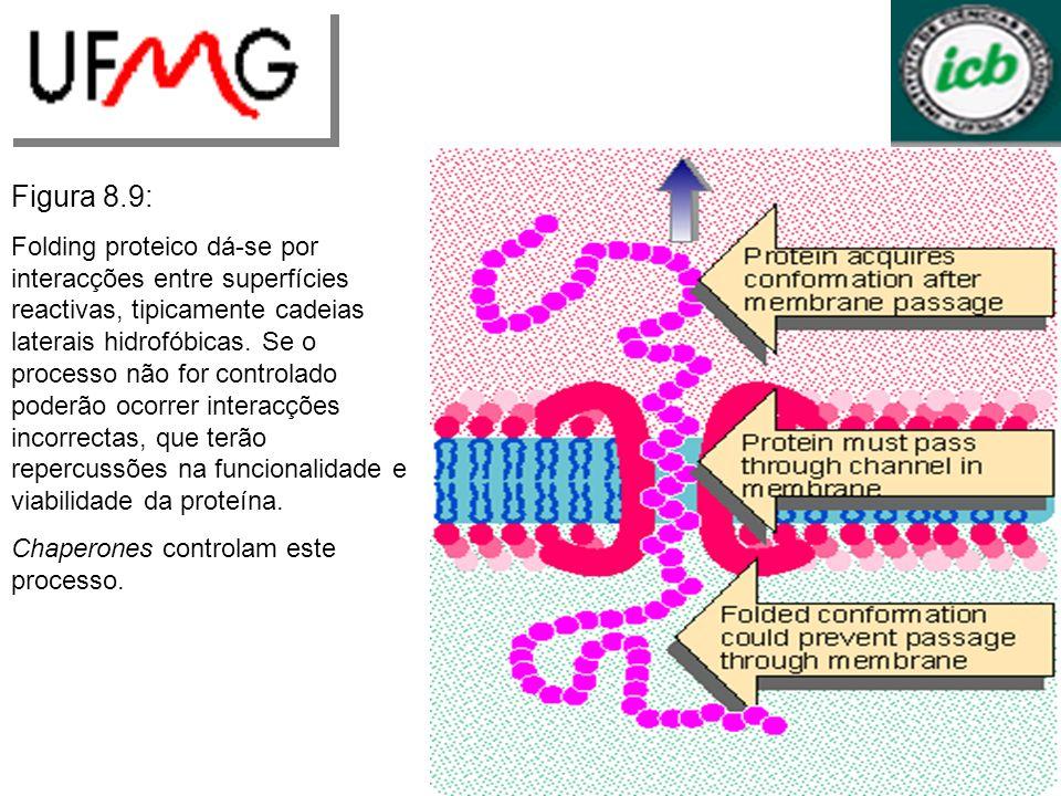 Figura 8.9: Folding proteico dá-se por interacções entre superfícies reactivas, tipicamente cadeias laterais hidrofóbicas. Se o processo não for contr