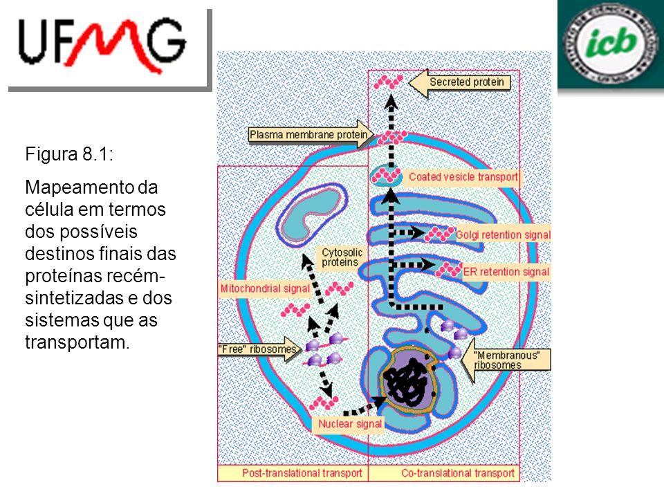 Figura 8.1: Mapeamento da célula em termos dos possíveis destinos finais das proteínas recém- sintetizadas e dos sistemas que as transportam.