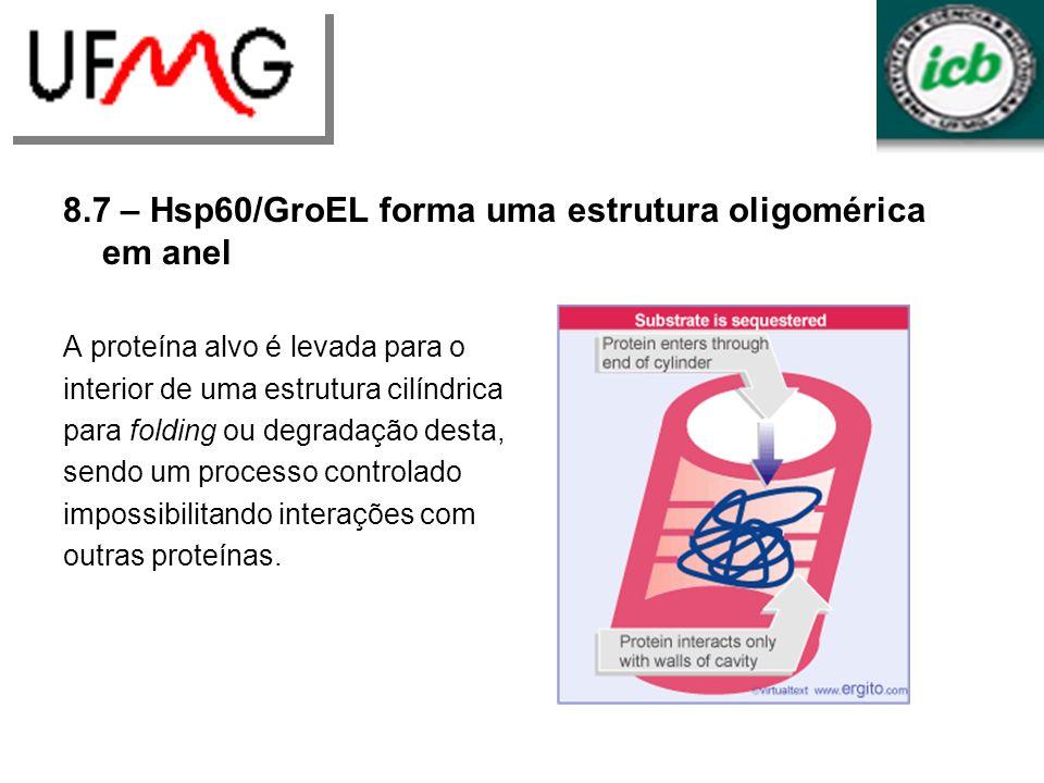 8.7 – Hsp60/GroEL forma uma estrutura oligomérica em anel A proteína alvo é levada para o interior de uma estrutura cilíndrica para folding ou degrada