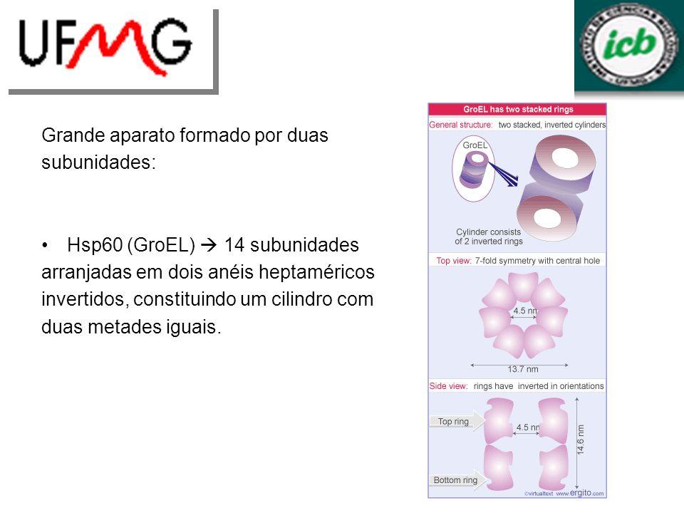 Grande aparato formado por duas subunidades: Hsp60 (GroEL) 14 subunidades arranjadas em dois anéis heptaméricos invertidos, constituindo um cilindro c